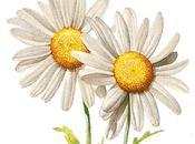 M'ama m'ama... quelli della margherita sono petali!
