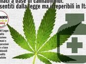 """Mozione Varese sulla """"Coltivazione terreni comunali Cannabis scopi terapeutici"""""""