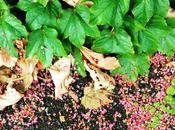 Nuovi appuntamenti #autumnisgreenLAB