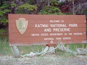 Katmai National Park King Salmon, delle zone mondo piu' ricche orsi bruni.