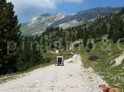 Dobbiaco Prato Piazza Mountain bike