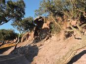 Breve excursus alcuni siti archeologici presenti nuraxi figus cortoghiana