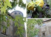 Piccoli tesori nascosti: l'orto medievale Vasanello