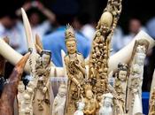 Cina: l'accordo sull'avorio salverà elefanti?