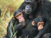 protesta agireora scimmie marte