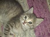 gattini sono cresciuti (... cercano casa)