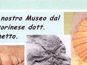 anni Museo Fossili