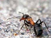 mondo delle formiche ruolo ecologico