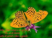 Farfalla variegata