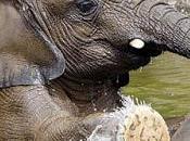elefanti cattività