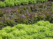 Fertilizzanti, esistono anche quelli naturali