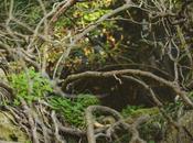 foresta urbana Lecce alla scoperta parco delle cave
