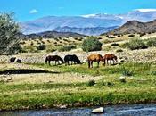 Mongolia cavalli, sconfinato senso libertà