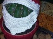 Cactus babbo natale