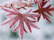 Stagionalità fiori: fine autunno inizio inverno