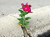 fiore tetto