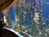 Valencia: l'Oceanogràfic città delle Arti Scienze #VisitSpain