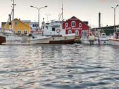 vita baccalà: morte miracoli merluzzo islandese