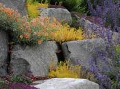 giardino roccioso asciutto Houzz)
