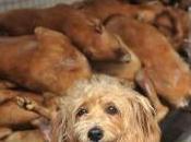 Furti cani aumento Italia: lasciamoli giardino!
