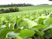 paradigma agroecologico come sintesi agronomia ecologia transizione dell'agricoltura verso sostenibilità