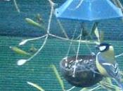 INVERNO SELVATICO LUBY-aiutiamo uccelli selvatici inverno