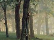 "Recensione: ""Nel bosco"" Thomas Hardy"