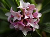 giardino, dolci profumi d'inverno.