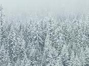 Winter Movies