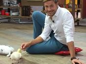 @RAIDue. CRONACHE ANIMALI Adottati cani programma