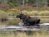 generi fotografici: fotografia naturalistica (wildlife)