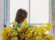 Idee fiori della Mimosa