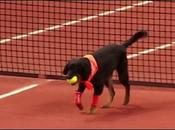 Brasil Open: cani diventano raccattapalle