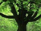 Vivere vicino agli alberi bene alla salute