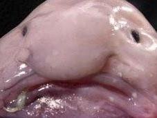 Vorrei essere pesce brutto mondo