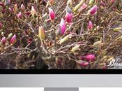 Magnolie York sfondo gratuito