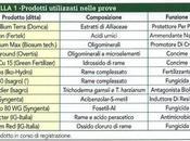 Università Foggia: Nella zona considerata infetta Salento, sarà possibile ipotizzare convivenza l'olivo batterio, batterlo territorio