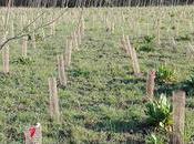 marzo: Giornata mondiale delle foreste...non Valle Olona