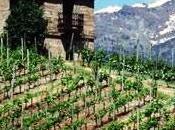 Courmayeur marzo aprile vini valdostani fanno