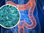 Microbiota: individuati batteri associati obesità fegato grasso