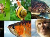 numeri della biodiversità Italia