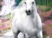 Schema punto croce: Cavallo_5
