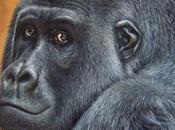 Quadro gorilla