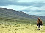 Nella Mongolia profonda, dinosauri vulcani