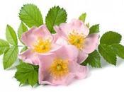 Olio Rosa Mosqueta