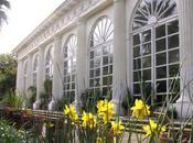 """""""Brividi d'Estate"""": spettacoli estivi all'Orto Botanico Napoli. Programma completo"""