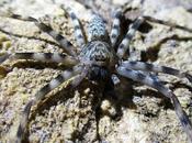 Australia diretta: pericoli della fauna selvatica