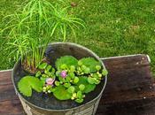 Giardino d'acqua vaso