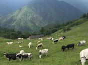 L'Oasi Zegna, natura, benessere buon cibo