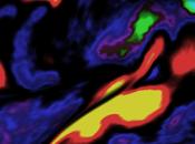nuova mappa cervello